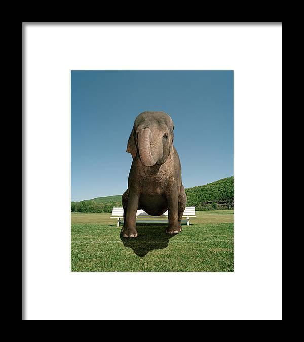 An Elephant Sitting On A Park Bench Framed Print By Matthias Clamer