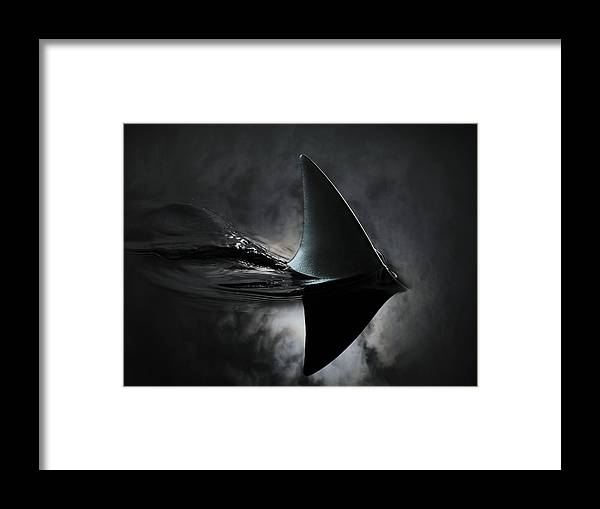 Risk Framed Print featuring the photograph An Image Of A Shark Fin Against Moon by Jonathan Knowles