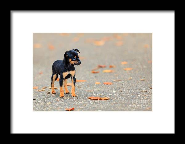 Humane Framed Print featuring the photograph Animals Homeless. Little Dog Cute Puppy by Voyagerix