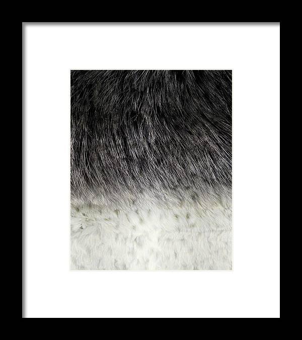 Animal_surfacepattern V1 4 Framed Print featuring the mixed media Animal_surfacepattern V1 4 by Lightboxjournal