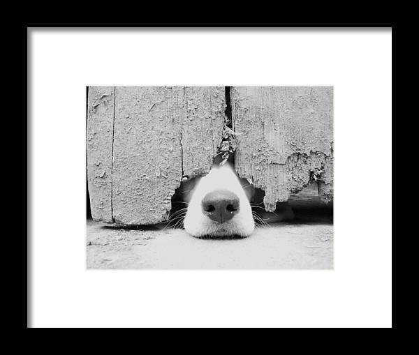 Pets Framed Print featuring the photograph Anyone Out There by By Jake P Johnson