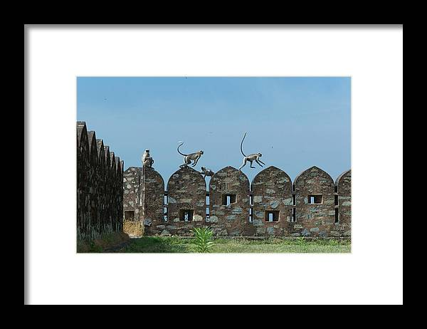 Clear Sky Framed Print featuring the photograph Apes Playing At Kumbhalgarh by Dominik Eckelt