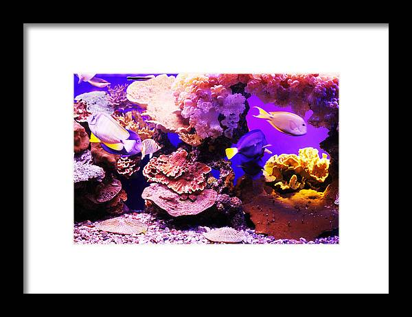 Pets Framed Print featuring the photograph Aquarium Fish by Skynesher