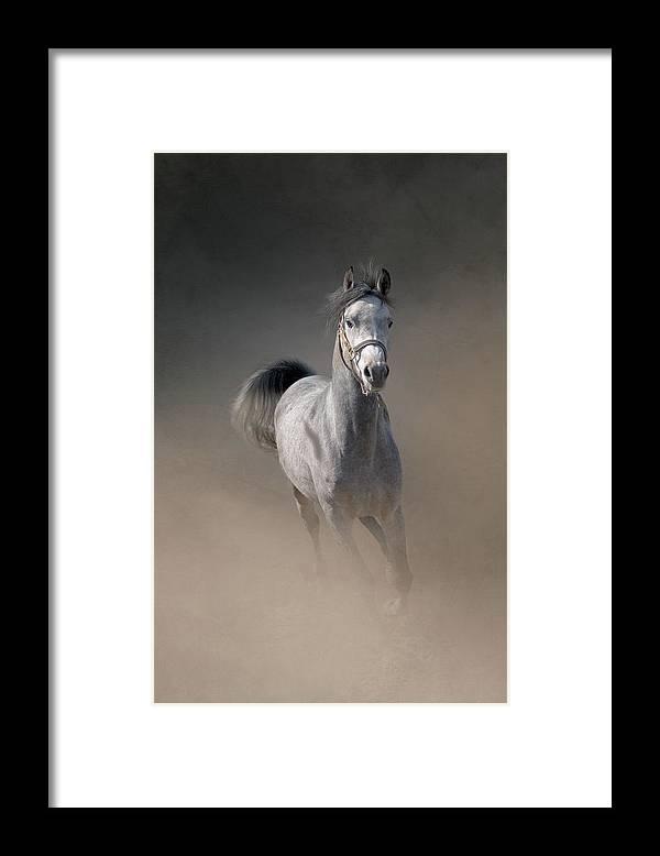 Horse Framed Print featuring the photograph Arabian Horse Running Through Dust by Christiana Stawski