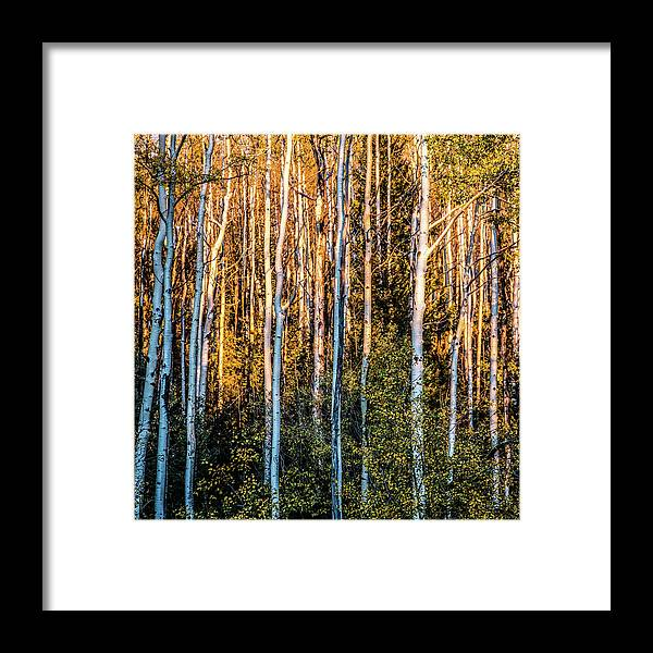 Aspen Framed Print featuring the photograph Aspen Glow by Candy Brenton