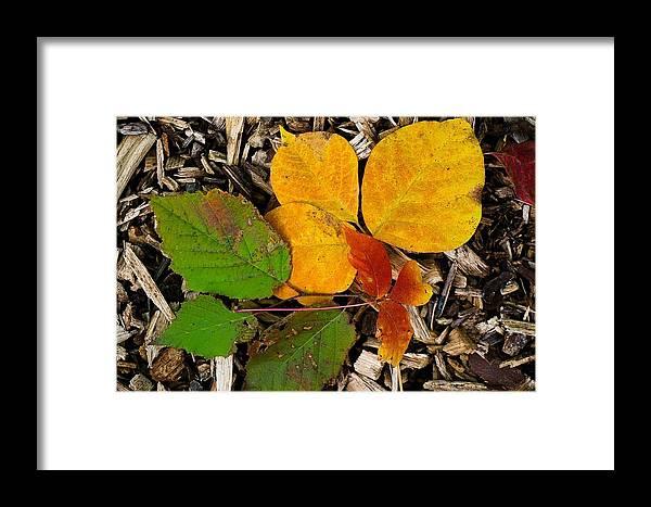 Fall Photograph Framed Print featuring the photograph Assiniboine Forest Floor No.1 by Desmond Raymond