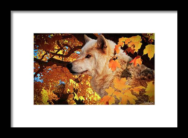 Wolf Framed Print featuring the photograph Autumn Leaves And Wolf by Gordon Semmens