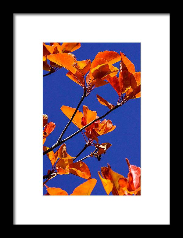 Autumn Leaves Framed Print featuring the photograph Autumn Leaves by Mark MIller