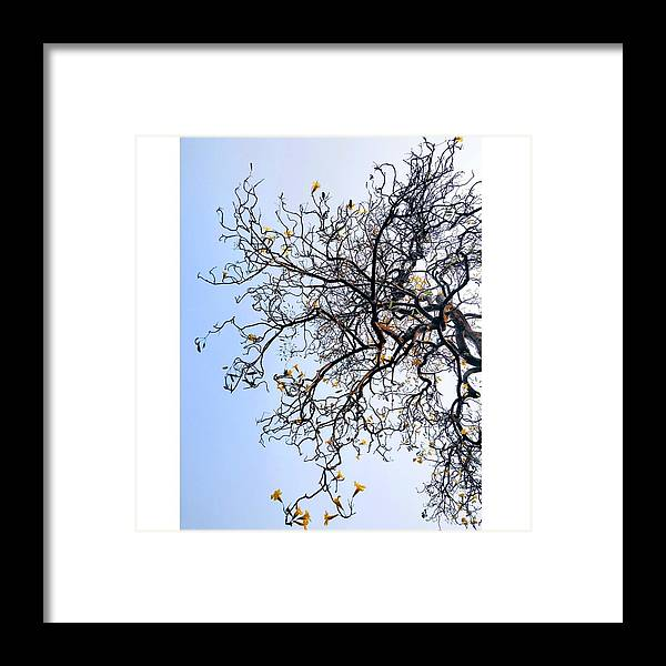 Autumn Framed Print featuring the photograph Autumn by Priya Hazra