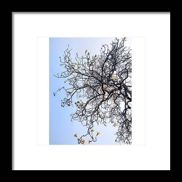 Autumn Framed Print featuring the photograph Autumn by Priya Hazra