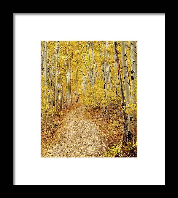 Autumn Framed Print featuring the photograph Autumn Road by Leland D Howard