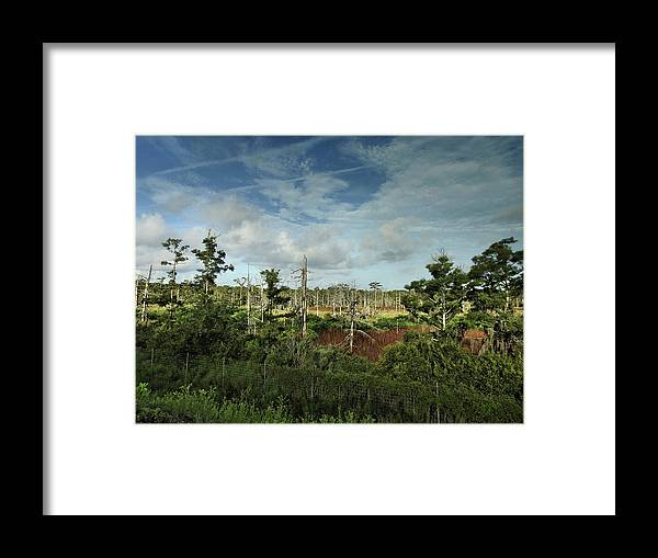 River Framed Print featuring the photograph Autumnal Altamaha by Laura Ragland