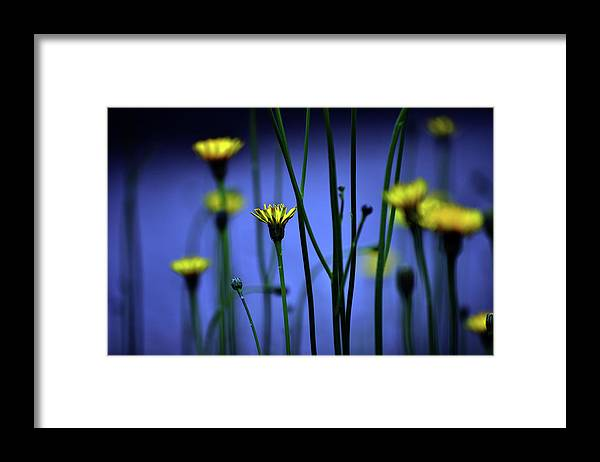 Outdoors Framed Print featuring the photograph Avatar Flowers by Mauro Cociglio - Turin - Italy