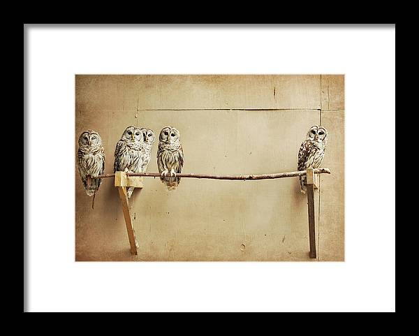 Scranton Framed Print featuring the photograph Baby Barred Owls by Tara Reifenheiser
