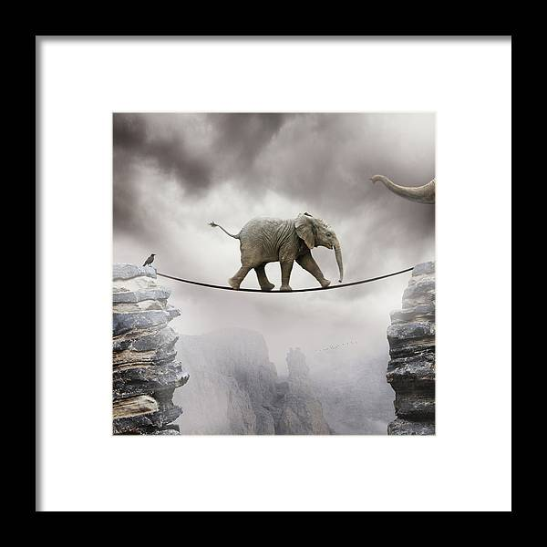 Animal Themes Framed Print featuring the photograph Baby Elephant by By Sigi Kolbe