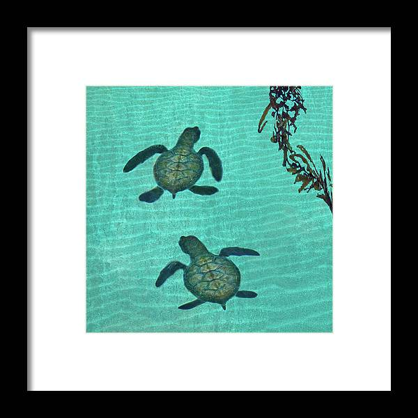 Seaweed Framed Print featuring the photograph Baby Sea Turtles by Melinda Moore