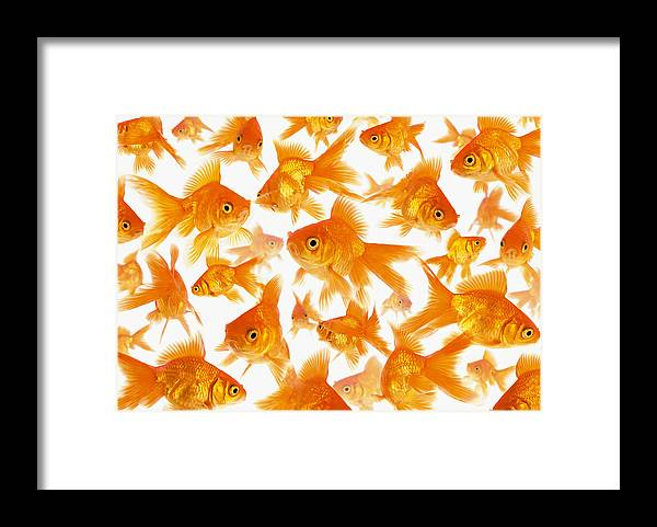 Orange Color Framed Print featuring the photograph Background Showing A Large Group Of by Cocoon