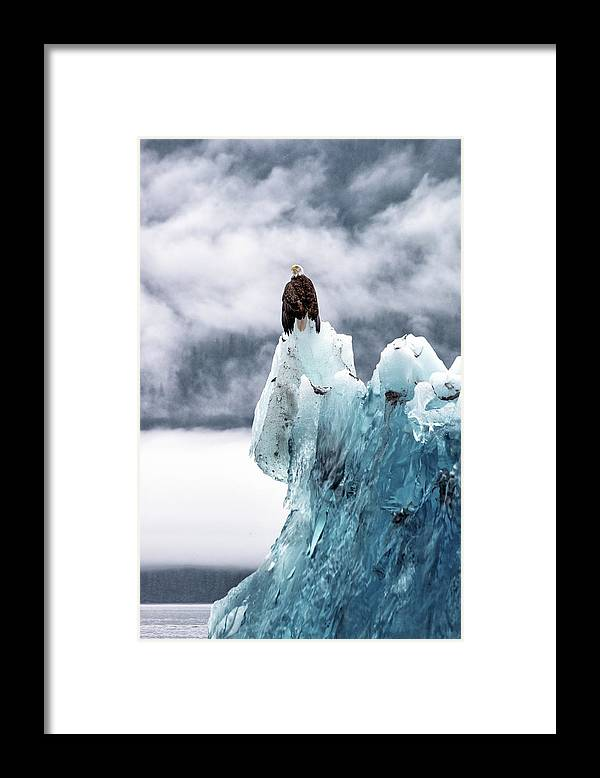 Iceberg Framed Print featuring the photograph Bald Eagle On The Glacier by Naphat Photography
