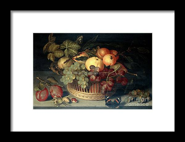 Plum Framed Print featuring the drawing Basket Of Fruit And Admiral Butterfly by Print Collector