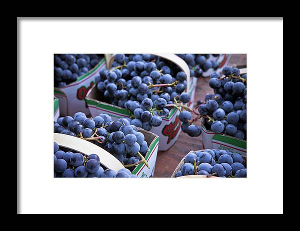 Toronto Framed Print featuring the photograph Baskets Of Grapes by Mary Smyth