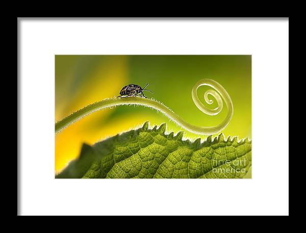 Magic Framed Print featuring the photograph Beautiful Insects On A Leaf Close-up by Ledyx
