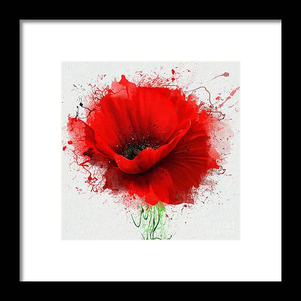 Beauty Framed Print featuring the digital art Beautiful Red Poppy, Closeup On A White by Pacrovka