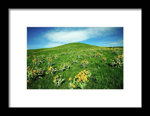 Yellow Framed Print featuring the photograph Beaver Creek Flowers by Todd Klassy