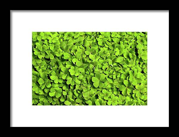 Leaf Framed Print featuring the photograph Bed Of Clover by Kledge