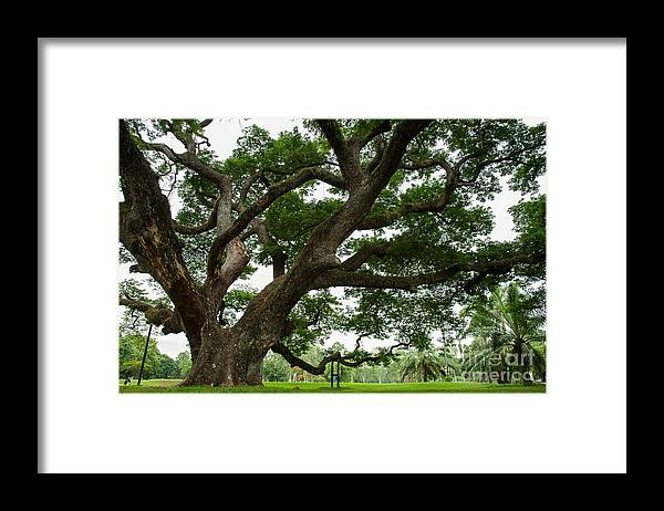 Big Framed Print featuring the photograph Big Trees State Park by Wanwisa Pimsoda