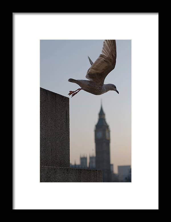 Clock Tower Framed Print featuring the photograph Bird Takeoff by Photograph © Jon Cartwright