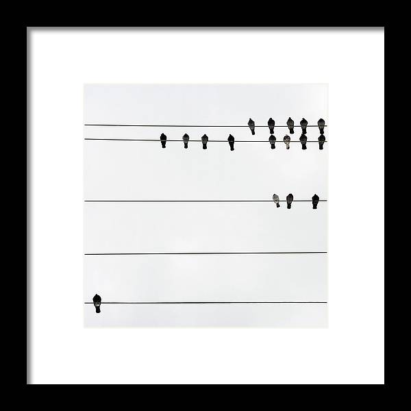 In A Row Framed Print featuring the photograph Birds On Electrical Wires by Kendall Mcminimy
