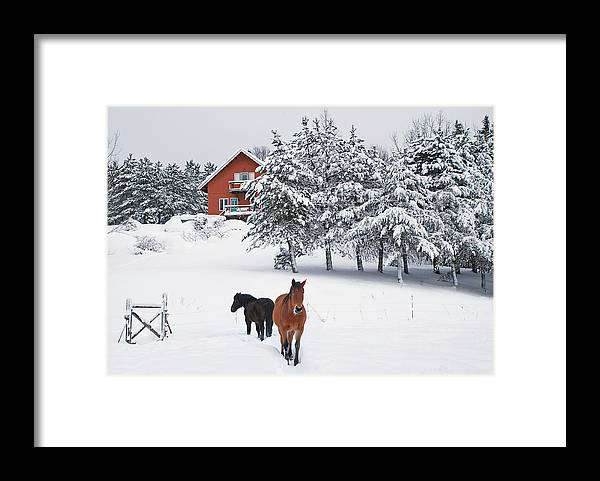 Horse Framed Print featuring the photograph Black And Brown Horse by Anne Louise Macdonald Of Hug A Horse Farm