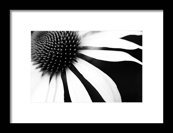 Sweden Framed Print featuring the photograph Black And White Flower Maco by Johan Klovsjö