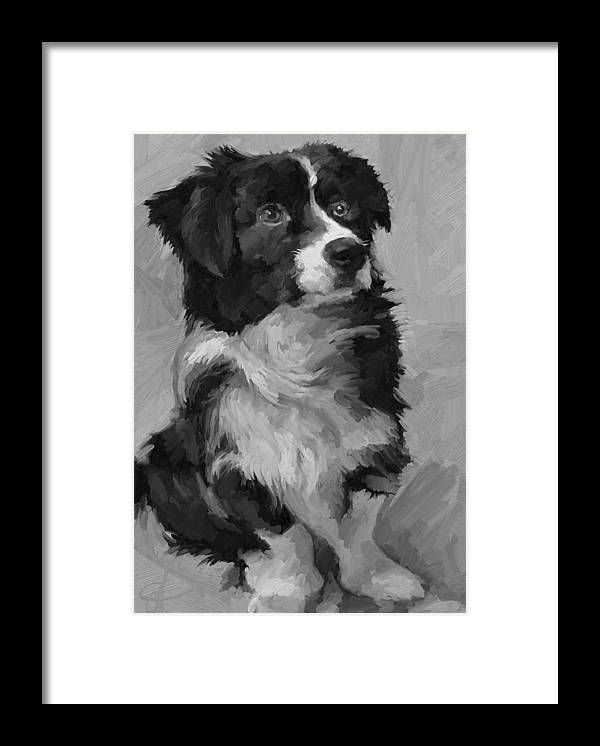 Border Framed Print featuring the painting Black and White Pup by Scott Waters