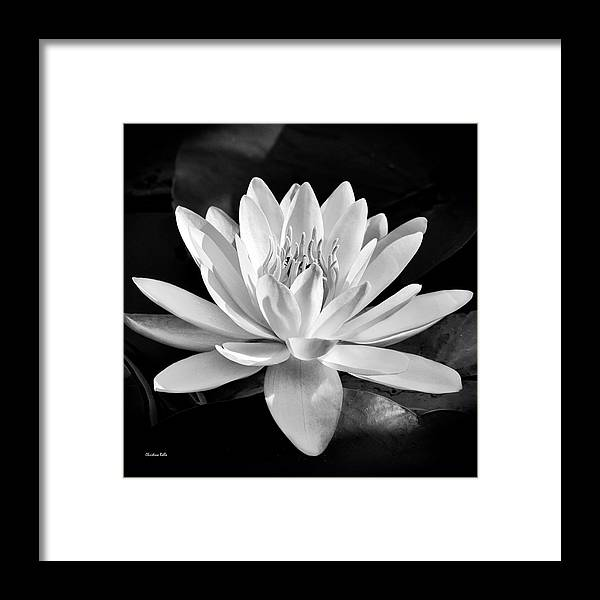 Black And White Water Lily Framed Print By Christina Rollo