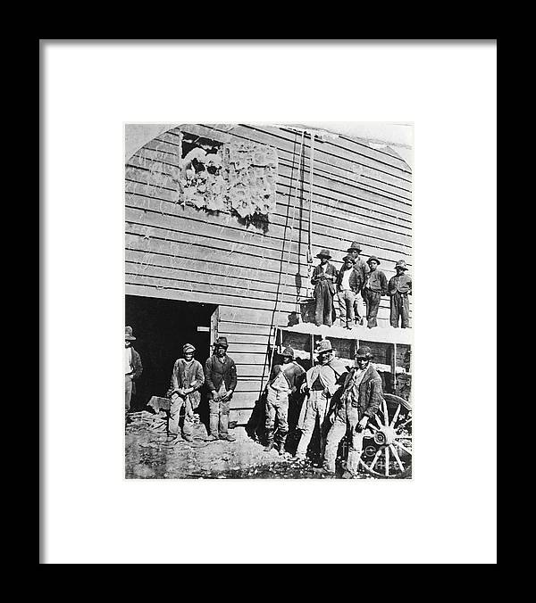 Working Framed Print featuring the photograph Black Men At Cotton Barn by Bettmann