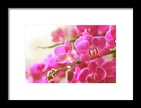 Environmental Conservation Framed Print featuring the photograph Blooming Pink Orchid On A Green Branch by Dreaming2004