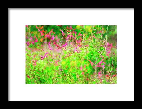 Landscape Framed Print featuring the photograph Blowing in the Spring Wind by Toni Hopper