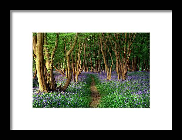 Tranquility Framed Print featuring the photograph Bluebells In Sussex by Photography By Sam C Moore