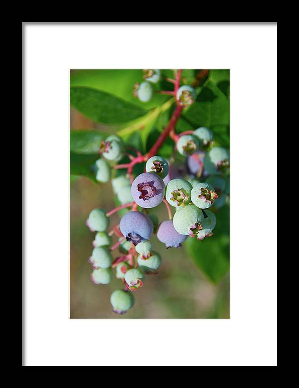 Large Group Of Objects Framed Print featuring the photograph Blueberries by ©howd, Howard Lau