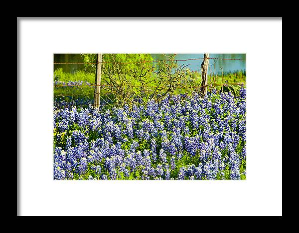 Season Framed Print featuring the photograph Bluebonnets, Texas by Donovan Reese