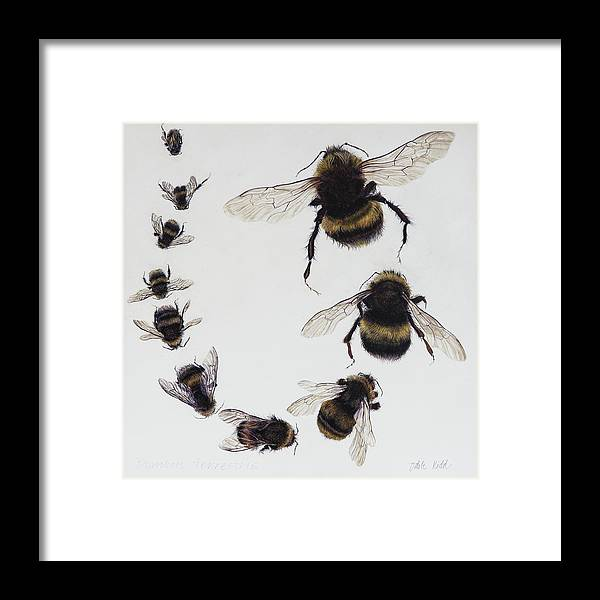 Nature Framed Print featuring the painting Bombus by Odile Kidd
