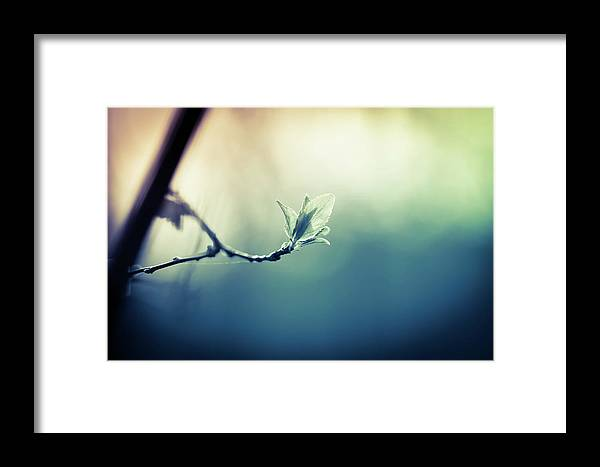 Sunlight Framed Print featuring the photograph Branch With New Leaves by Jeja