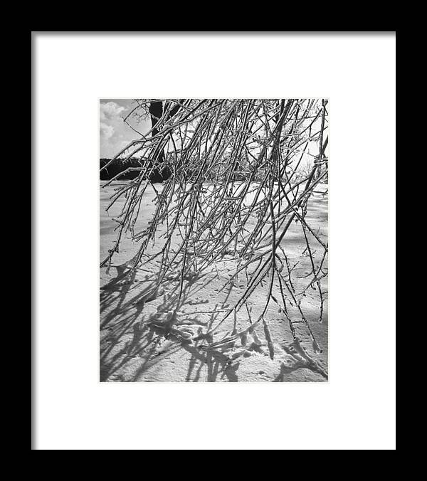 Timeincown Framed Print featuring the photograph Branches Of Tree Bending Under Weight Of by Fritz Goro