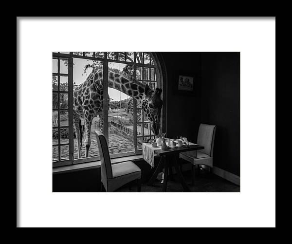 Giraffe Framed Print featuring the photograph Breakfast Time by Jie Fischer