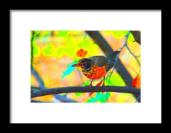 Brushed Robin Framed Print featuring the photograph Brushed Robin by Edward Swearingen