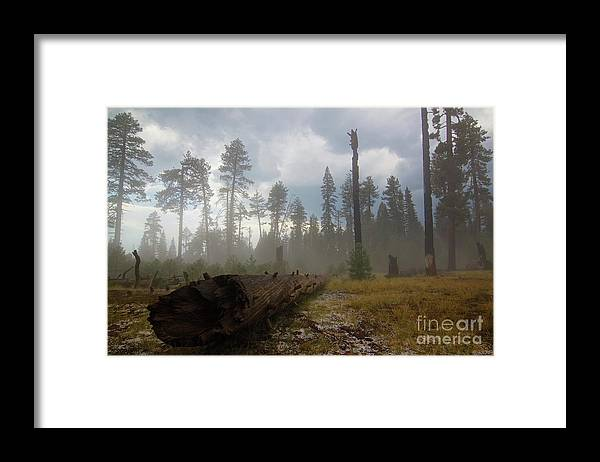 Burnt Framed Print featuring the photograph Burned Trees At Lassen Volcanic by Victor De Souza