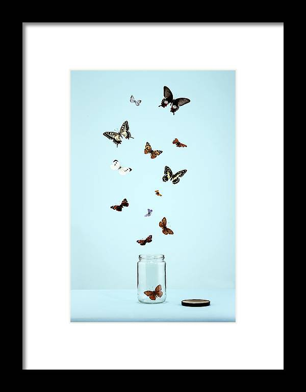 Animal Themes Framed Print featuring the photograph Butterflies Escaping From Jar by Martin Poole
