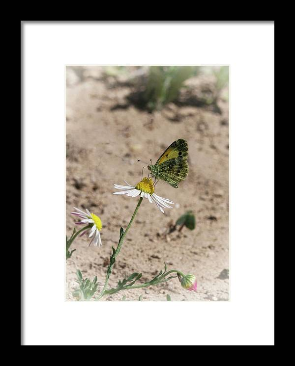 Betty Depee Framed Print featuring the photograph Butterfly Day by Betty Depee