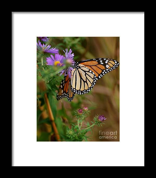 Butterfly Framed Print featuring the photograph Butterfly by Deb Cawley